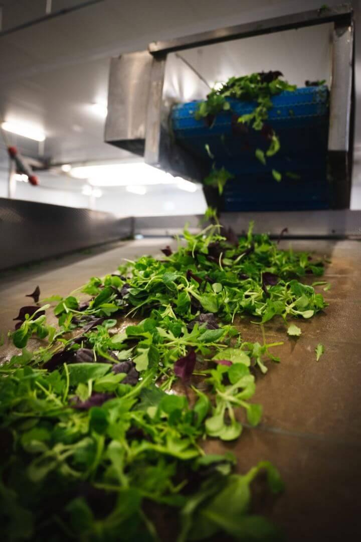 Willowbrook Foods Salad